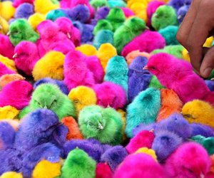 colors and animals image