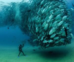 fish, sea, and ocean image