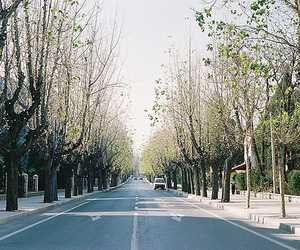trees, car, and street image