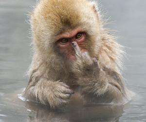 monkey, funny, and animal image