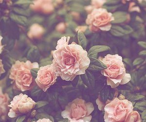 dreamy, flower, and photography image