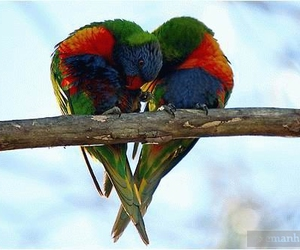 love, birds, and heart image