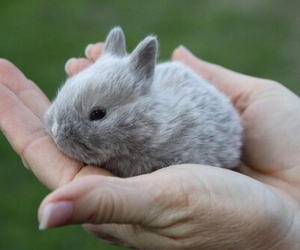 animal, baby, and rabbit image