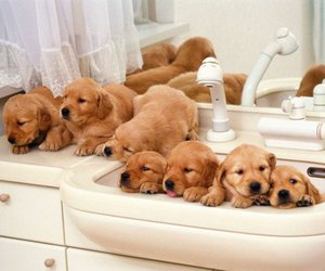 dog, puppy, and cute image