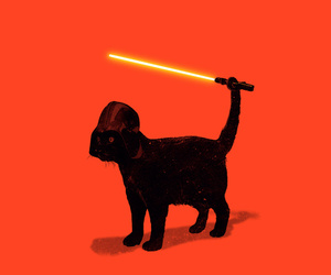 cat and star wars image