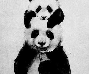 bonitos and pandas image