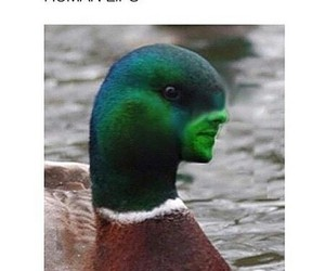duck and funny tumblr image
