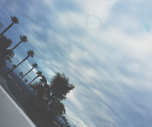 grunge and palm trees image