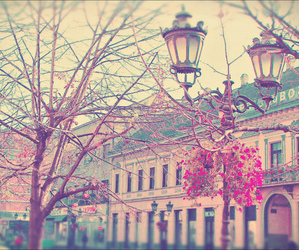 europe, weheartit, and flowers image