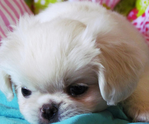 dog, pretty, and dogs image