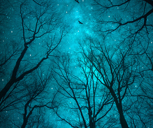 stars, blue, and trees image