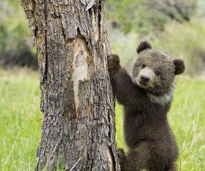 bear, cute, and animal image