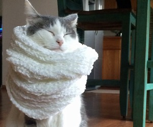 cat, cute, and scarf image