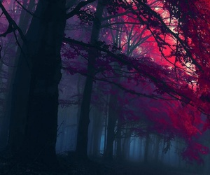beautiful, forest, and magic image