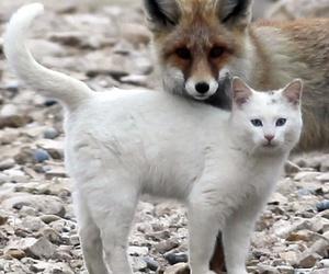 cat, animal, and fox image