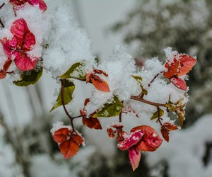 flower, nikon, and snow image