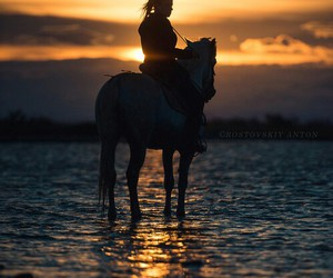 equestrian, water, and horse image