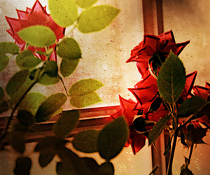 flower, plant, and window image