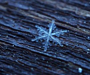 macro, snow, and winter image