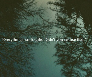 quote, fragile, and trees image