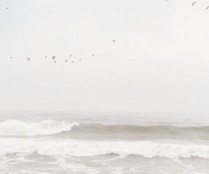 sea, white, and bird image