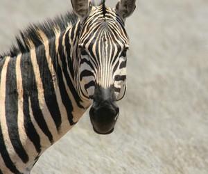 animal, black & white, and Dream image