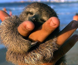 cute, sloth, and animal image