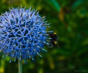 bee, flower, and photography image