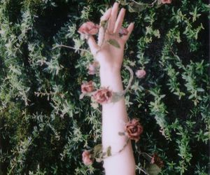 rose, flowers, and hand image