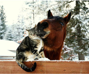horse, cat, and snow image