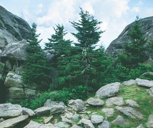 nature, bear, and green image