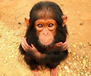 monkey and animal image