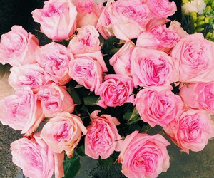 beautiful, pink roses, and roses image