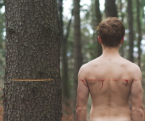 tree, nature, and blood image