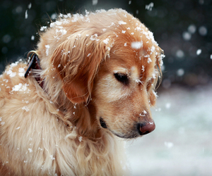 dogs, winter, and love rain image
