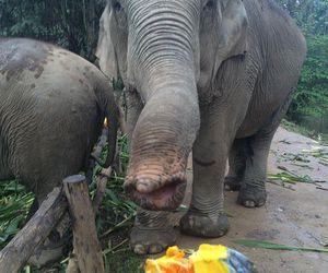 elephants, thailand, and animal rescue image