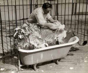 lion, bath, and black and white image