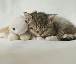 cats, kitty, and toy image
