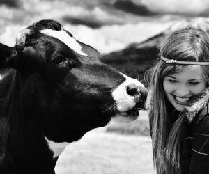cow and hair image
