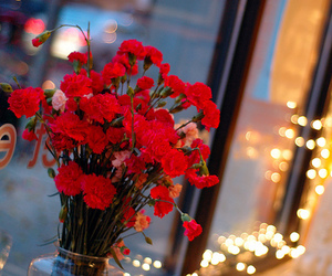 flowers, lights, and photography image