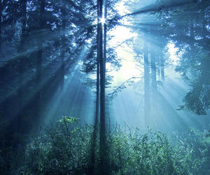 forest, light, and magical image