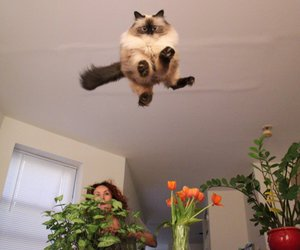 cat, funny, and jump image