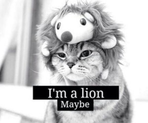 lion, cat, and cute image