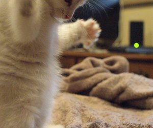 cats, cute cats, and cute animals image