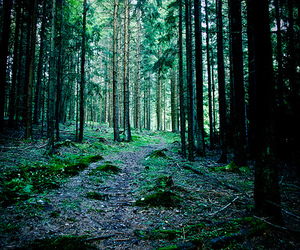 forest, green, and tree image
