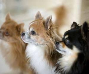 cute animals, baby animals, and chihuahua image