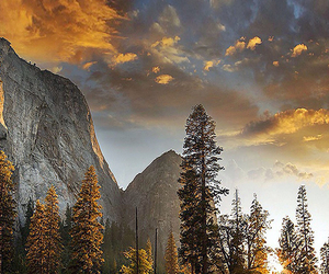 beautiful, forest, and mountains image
