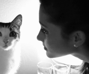cat, ariana grande, and funny image