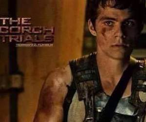 picture, the scorch trials, and dylan o'brien image