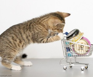 cat and shopping image
